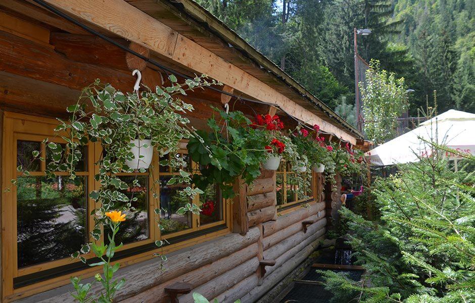 Valea Paradisului foisor flori