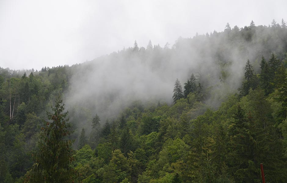 Valea Paradisului padure ceata